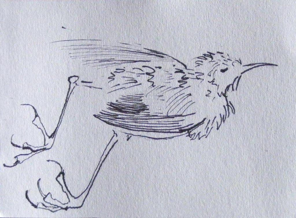 Dead Wren Drawing by Greta Berlin